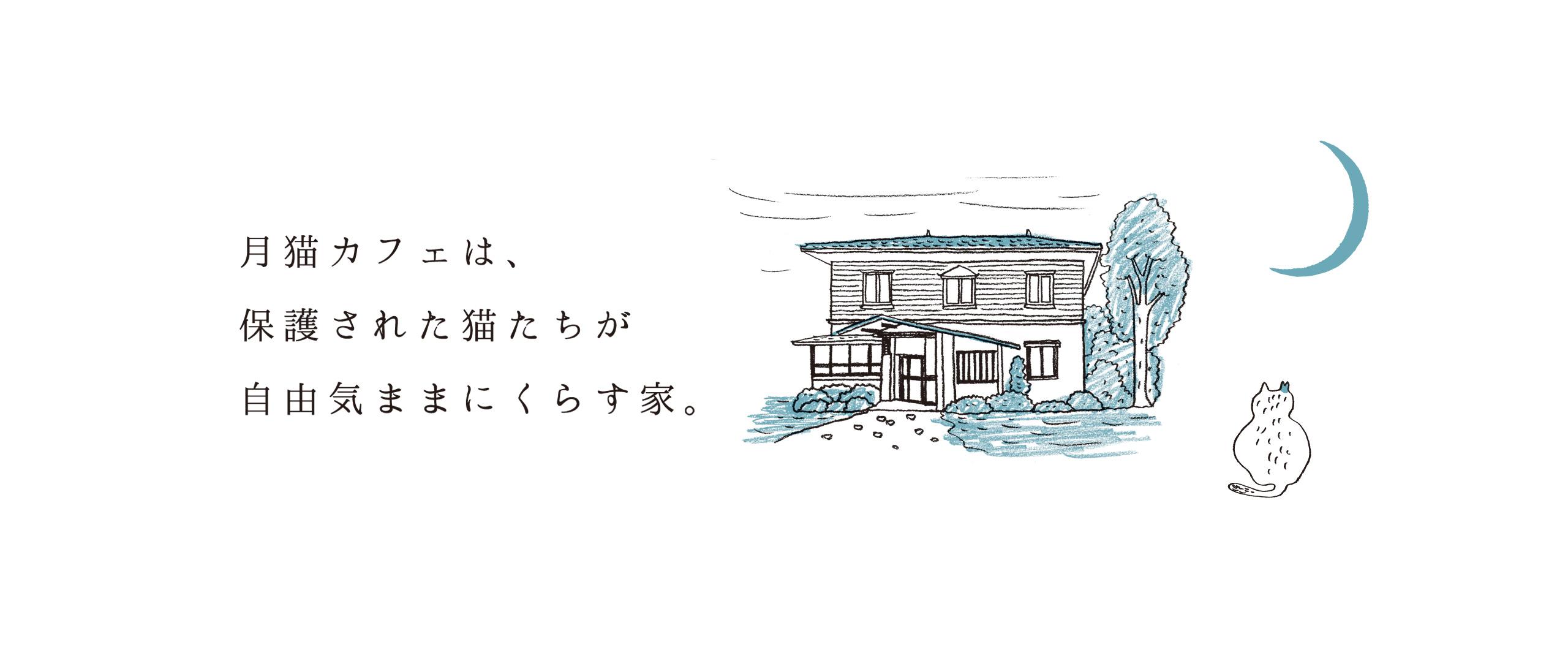 里親さん募集中の譲渡型保護猫カフェ